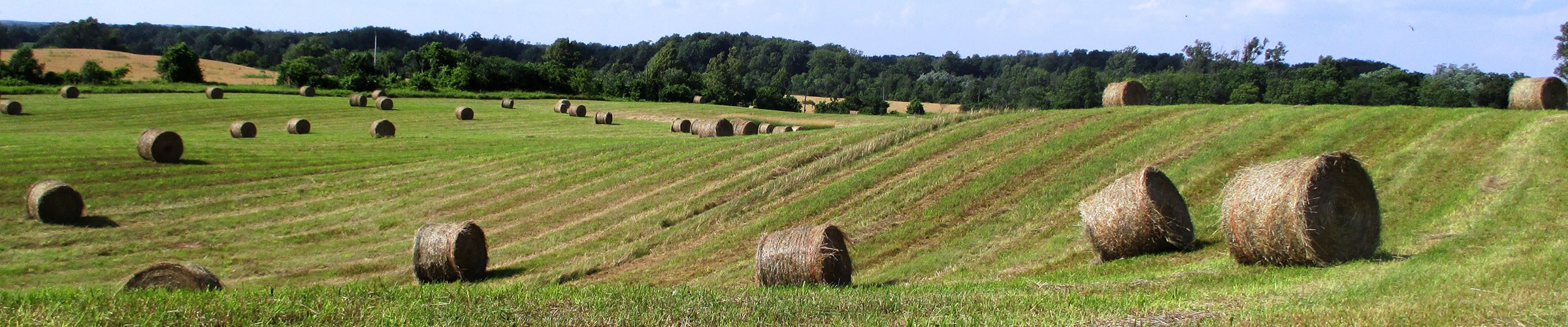 Panoramic view of Scotsdale's hay fields at harvest time