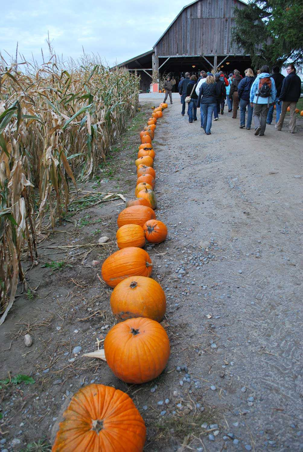 A barn gets a second chance at the Knox  Family Pumpkin Farm (Photo courtesy of CLOCA)