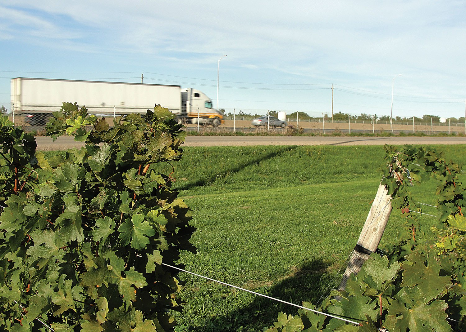 Arable land competes with infrastructure, as seen here with this vineyard nestled in the Twenty Valley region of the Niagara Peninsula, coexisting with the busy six-lane Queen Elizabeth Way near Beamsville.