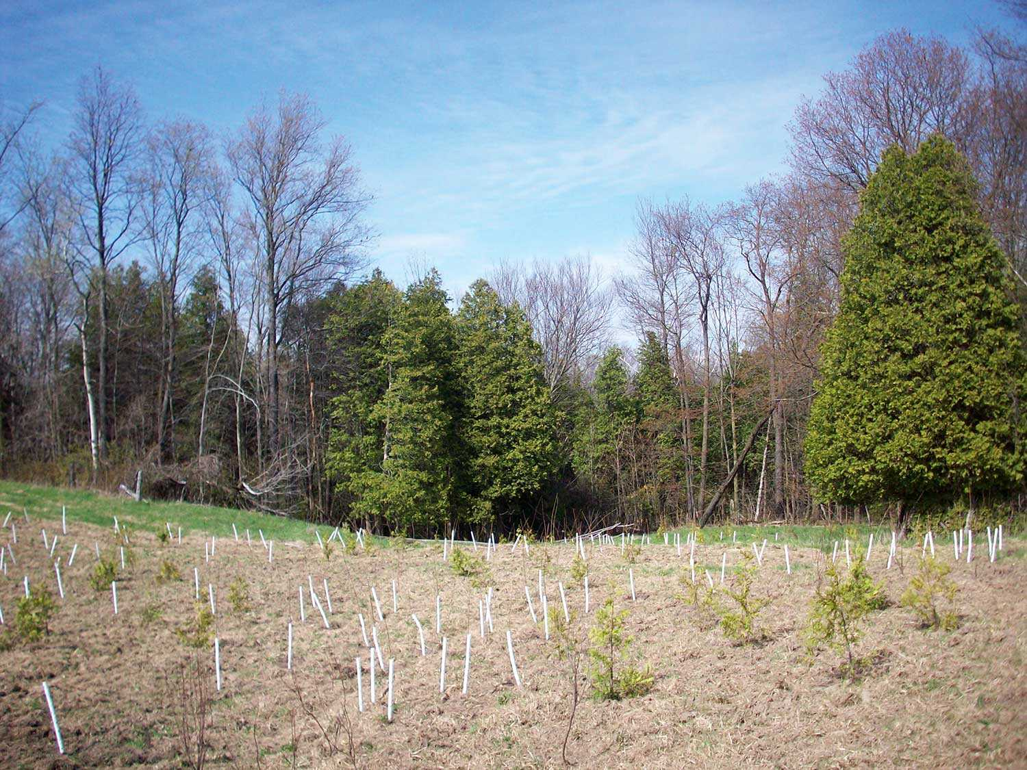 Planted area of lowland species expanding existing cover adjacent to the former pasture on the Blair property (Photo: John Stille).